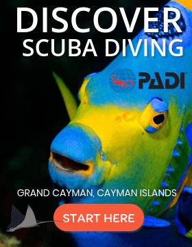 Discover Scuba Grand Cayman