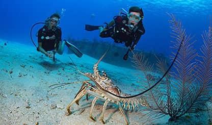 cayman scuba diving ile ilgili görsel sonucu