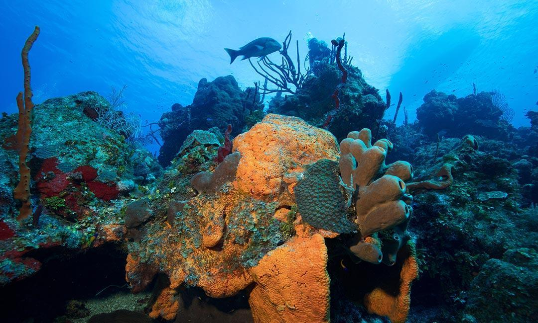 Cayman Diving Sites